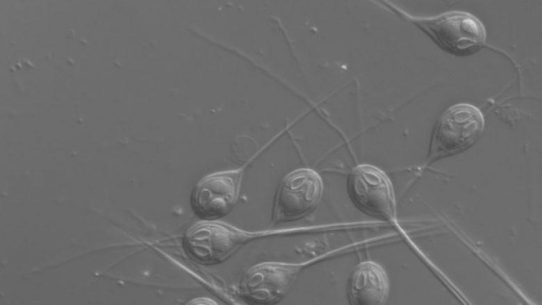 Zbulim i ri – shkencëtarët aksidentalisht zbulojnë një qenie që nuk thith oksigjen